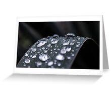 Dew Drops #1 Greeting Card