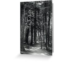path in woods Greeting Card