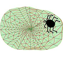 The Spider and the Web Photographic Print