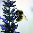 Honey Bee & Lavender by Tori Snow