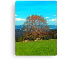Lonely old tree in springtime scenery Canvas Print
