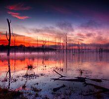 In The Morning Mist by Matthew Stewart