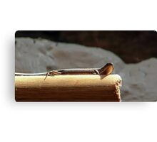 Skink on a Stick Canvas Print