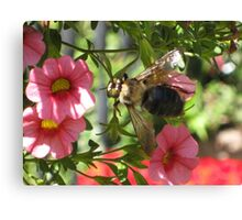Beezy as can bee Canvas Print