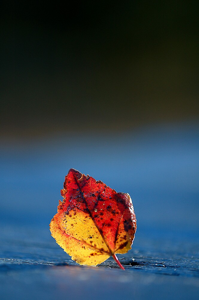 It's Fall in the Details, Take 2 by justmartha