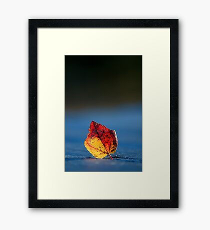 It's Fall in the Details, Take 2 Framed Print