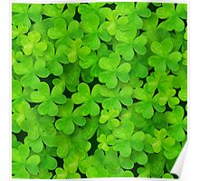 Green clovers leaves field Poster