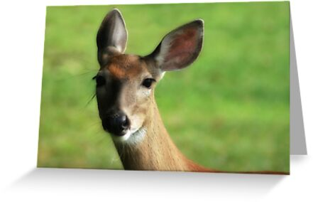 DO YOU HEAR WHAT I HEAR? by Lori Deiter