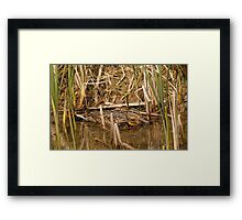 Mrs Mallard and ducklings Framed Print