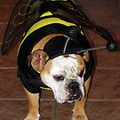 Bulldog Bumble Bee by Jenni Atkins-Stair