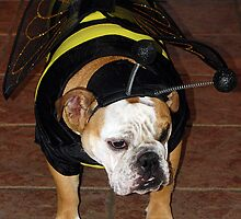 Bulldog Bumble Bee by Jenni Atkins-Stair