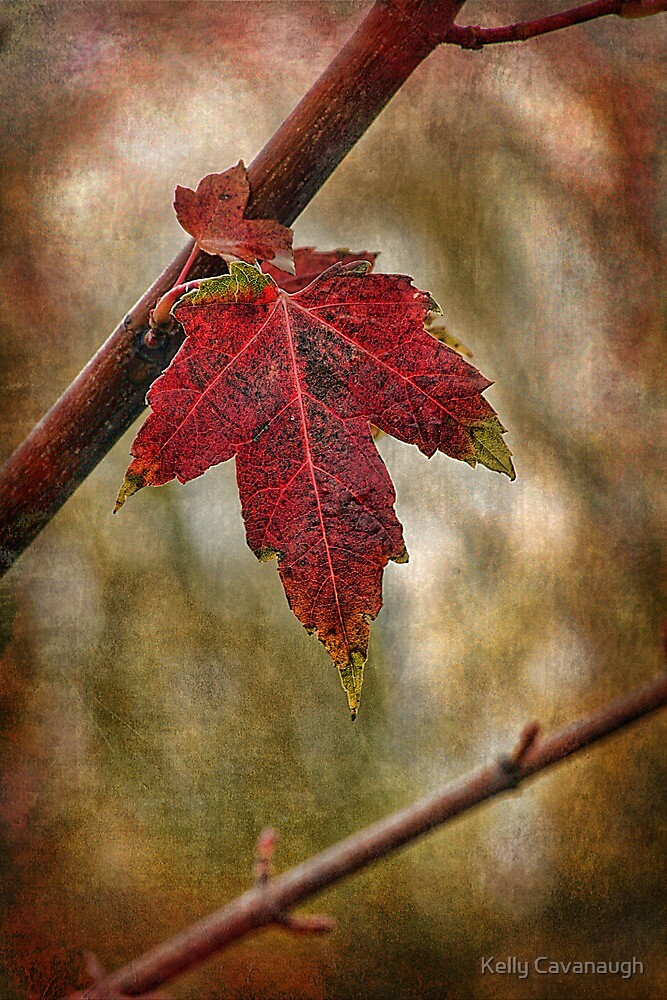 Autumn Blaze by Kelly Cavanaugh
