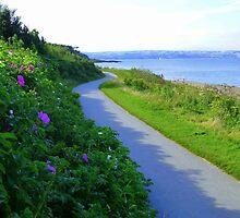The Coastal Path by Fara