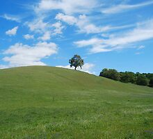 Solo tree in the rolling hills by N2Digital