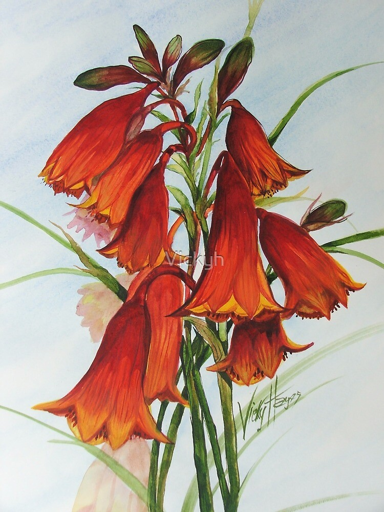 Australian Christmas Bells by Vickyh