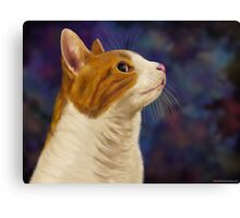 Cute Brown and White Furry Cat Looking to Right Canvas Print
