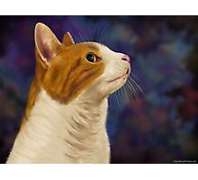 Cute Brown and White Furry Cat Looking to Right Photographic Print