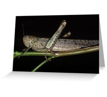 grass-hopper Greeting Card