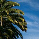 Palm Tree by ShahnaChristine .