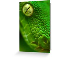 Green Python, Papua New Guinea. Greeting Card