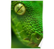 Green Python, Papua New Guinea. Poster