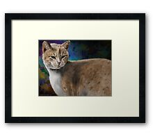 Beautiful Furry and Fluffy Brown Cat Portrait Framed Print