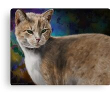 Beautiful Furry and Fluffy Brown Cat Portrait Canvas Print