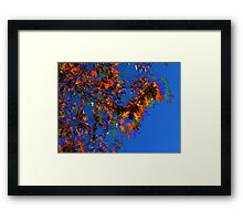 Blowing Leaves HDR Framed Print