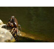 Freshwater Crab Photographic Print