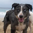 Bug my dog at Boat Harbour by wheelyawheely