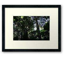 Wingham Brush #2 Framed Print