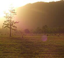 Sunset, Kangaroo Field by SullivanInc