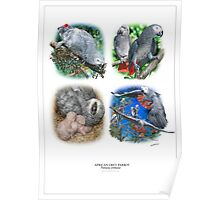 AFRICAN GREY PARROT '4 UP'  POSTER Poster