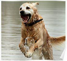 Bounding Dog-Boronia,Victoria Poster