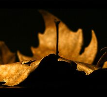 Leaf by Nicoletté Thain Photography