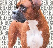 Young Boxer Dog by Carsten Reisinger