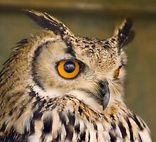 Bengali Eagle Owl by Geoff Carpenter
