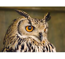 Bengali Eagle Owl Photographic Print