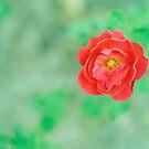 Rosa by BryanLee