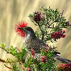 The Little Wattle Bird by UncaDeej