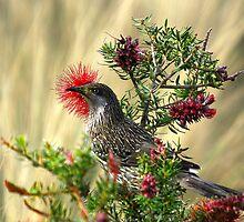 The Little Wattle Bird by UncaDeej