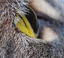 A Cats Eye View by Sheri Nye