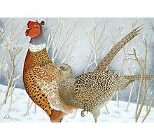 Pheasants in the snow Photographic Print