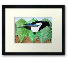 A Magpie perched on a fence Framed Print