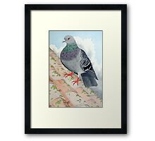 A Pigeon at rest on a rooftop Framed Print