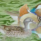 Mandarin Ducks on a lake by aquartistic