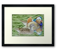 Mandarin Ducks on a lake Framed Print