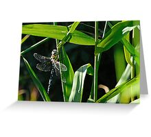 Posed Dragonfly Greeting Card
