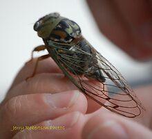 Texas-sized Locust by zpawpaw