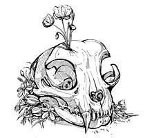 Little Skull Photographic Print
